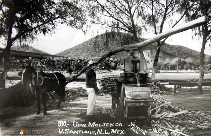 MOLIENDA DE CANA