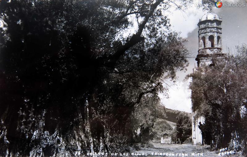 CALZADA DE LOS OLIVOS Circa 1920-1930