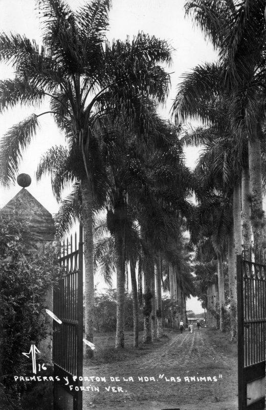 Palmeras y entrada de la Hacienda Las Ánimas