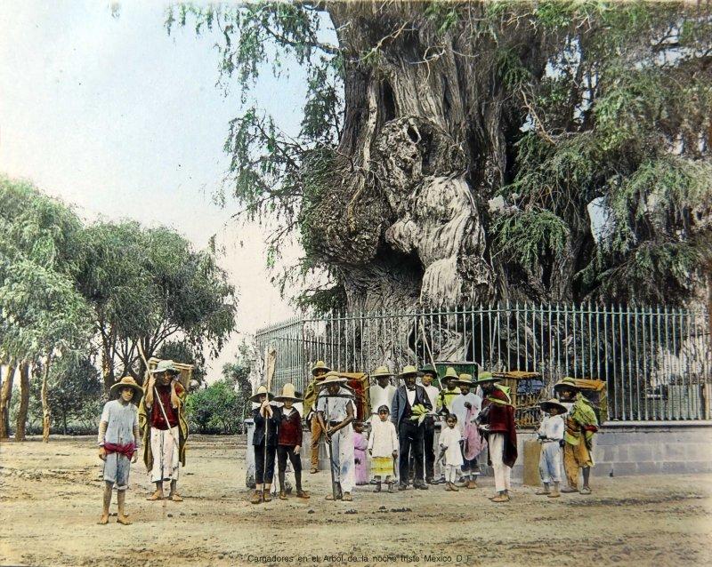 Cargadores junto al Arbol de la noche triste Mexico D F hacia 1900