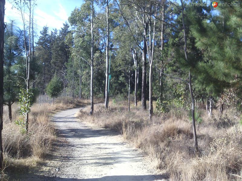 Bosque de San Diego Metepec. Enero/2016