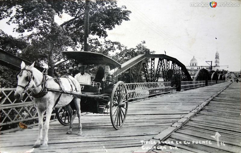 Tipica Arana en el Puente