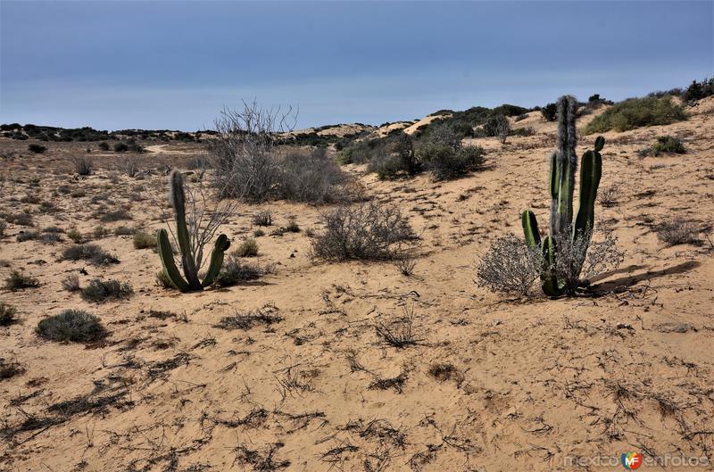 Desierto del Vizcaino