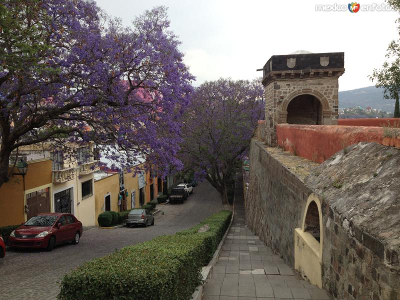 La calle del vecino en primavera, a la derecha el ex-convento franciscano del siglo XVI. Abril/2018