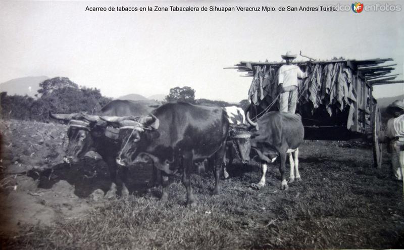 Acarreo de tabacos en la Zona Tabacalera de Sihuapan Veracruz Mpio. de San Andres Tuxtla.