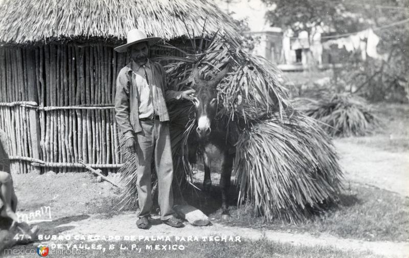 Burro cargado de palma para techar