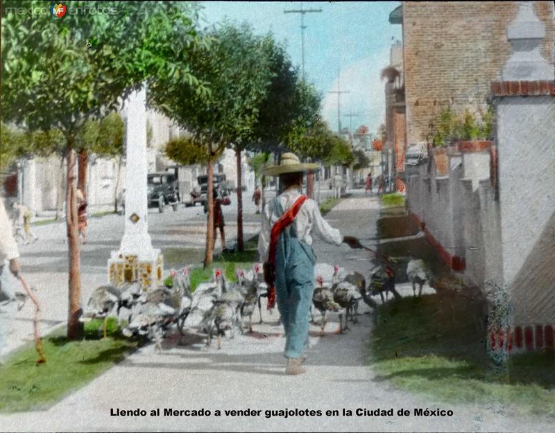 Tipos mexicanos Llendo al Mercado a vender guajolotes en la Ciudad de México.