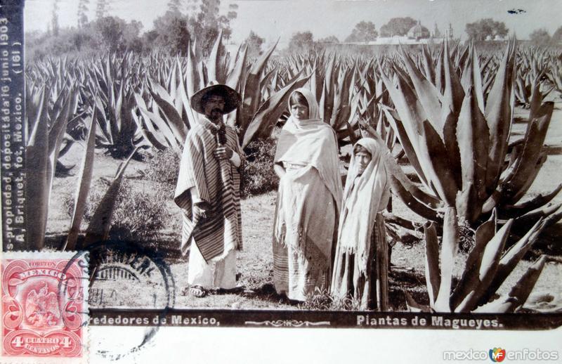 Alrededores de Mexico MAGUEYES por el Fotógrafo Abel Briquet ( Circulada el 25 de Julio de 1909 ).