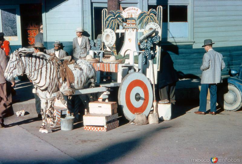 Burro Cebra (1950)