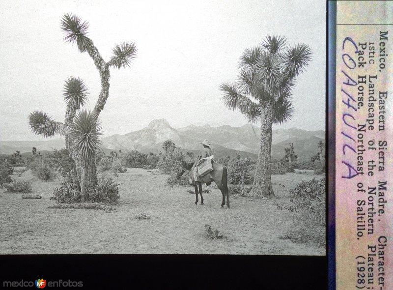 Panorama de La Sierra Madre al Noreste de Saltillo. ( Fechada en 1928 ).