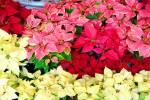 Fortín de las Flores