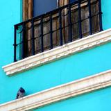 Paloma y balcón