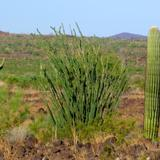Reserva de la Biósfera El Pinacate
