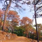 Bosque de Chipinque
