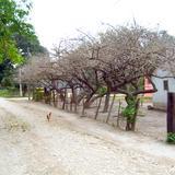 Caminos de San Miguel de la Mora