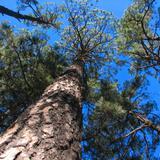 Bosque de Cusárare