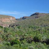 Oasis en la Sierra de la Giganta