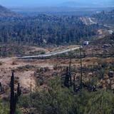 Valle de los Cirios