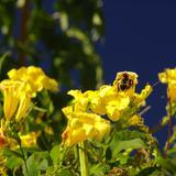 Flora de San Javier