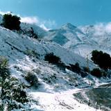 Grasero Nevado
