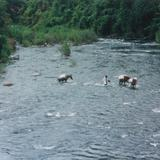 Cruzando el Rio San Juan Bautista en Valle Nacional Oaxaca