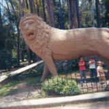 leon en el zoologico