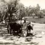 Carreta de bueyes en Morelia