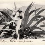 Tlachiquero