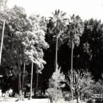 Alameda de Tepic