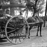 Carreta típica de Mazatlán