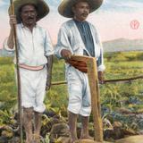 Indios labradores