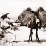 Arriero cargando un burro