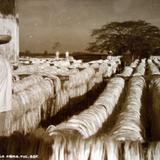 Tipos Mexicanos Trabajador secando la Fibra de el Henequen