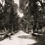 Avenida Colón