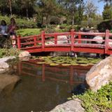 Puente del Jardín Japones. Noviembre/2016