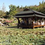 Estanque del Jardín Japones. Noviembre/2016