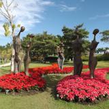 Sección Abanico de Flores. Noviembre/2016