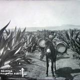 Tipos Mexicanos tipico aguador.