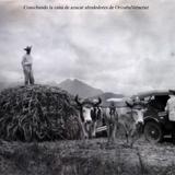 Cosechando la cana de azucar alrededores de OrizabaVeracruz .