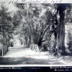 Bosque de Chapultepec por el Fotógrafo Abel Briquet ( Circulada el 16 de Noviembre de 1908 ).