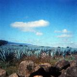 Panorama de agaves tequileros 1972
