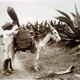 Tipos Mexicanos tipico tlachiquero Por el Fotógrafo Hugo Brehme. .