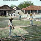 Secando el cafe Cordoba Veracruz .