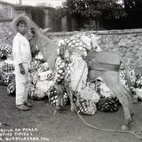 Tipos Mexicanos cargador de tequila en penca.