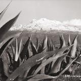 Volcán Iztaccíhuatl, con magueyes