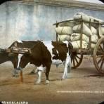 Carreta cargada de maiz  por el Fotógrafo Charles B. Waite 1908. - Guadalajara, Jalisco