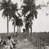 Por las palmeras