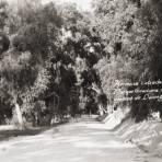 Calzada en el Parque Guadiana