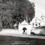 El Arbol de el Tule Santa María del Tule Oaxaca.