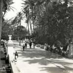 Alameda de los Cocos (1914)